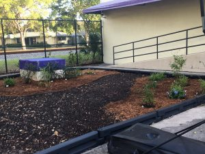 After. Over time, the plants will fill the mulched beds.